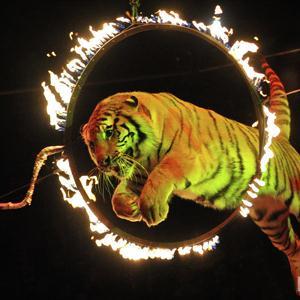 Цирки Оренбурга