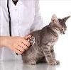 Ветеринарные клиники в Оренбурге